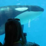 SeaWorld – Day 5 in CA