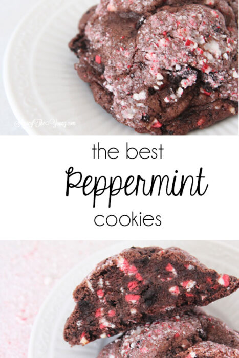 The dark chocolate peppermint cookies recipe featured by top Utah Foodie Among the Young: image of large PIN | Chocolate Peppermint Cookies by popular Utah lifestyle blog, Among the Young: Pinterest image of chocolate peppermint cookies.